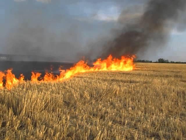 Кроки екологічної свідомості. Спалювання стерні. | Хмельницька обласна  державна адміністрація — Офіційне інтернет-представництво